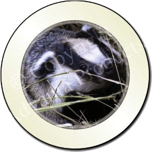 Badger tax disc holder