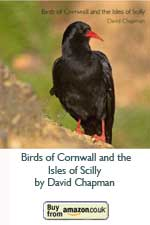 Birds of Cornwall and the Isles of Scilly (Pocket Cornwall) (Paperback) by David Chapman