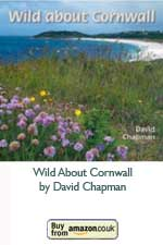Wild About Cornwall (Paperback)