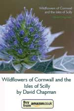 Wildflowers of Cornwall and the Isles of Scilly (Pocket Cornwall) (Paperback) by David Chapman