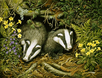 Badger painting by Dick Twinney